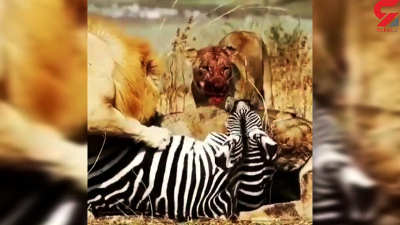 زنده خواری سلاطین جنگل + فیلم