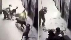 لحظات جدال مرد بیچاره با 4 سگ خشمگین + فیلم