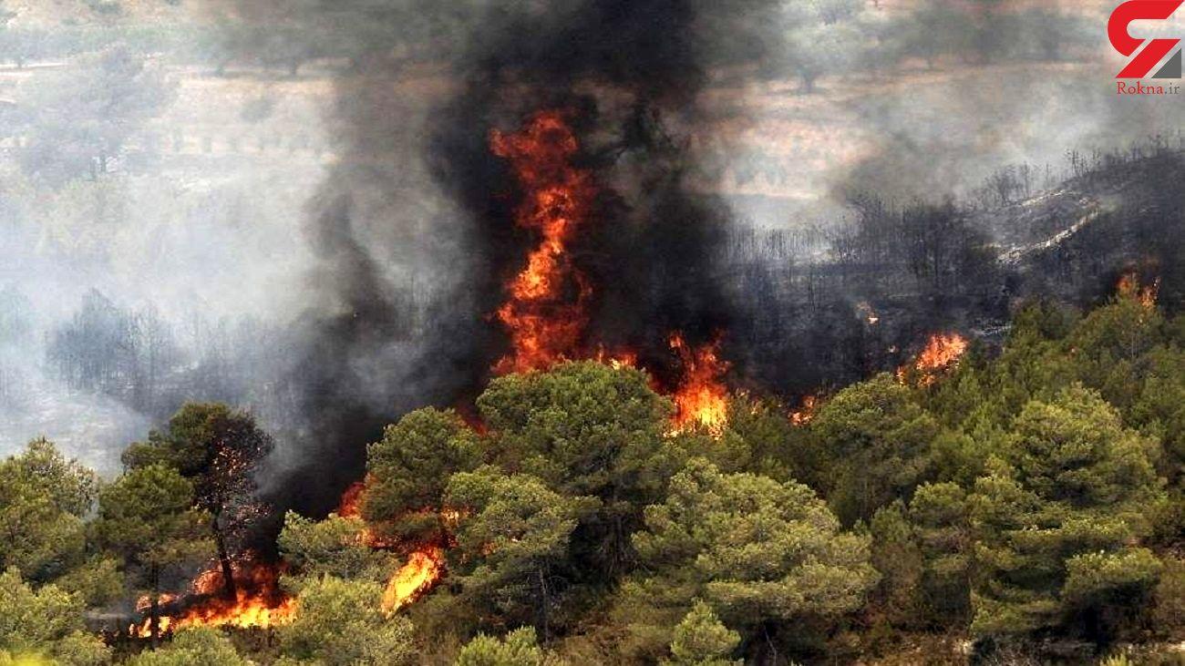آیا آتش سوزی جنگل ها با خشکسالی امسال ارتباط دارد؟
