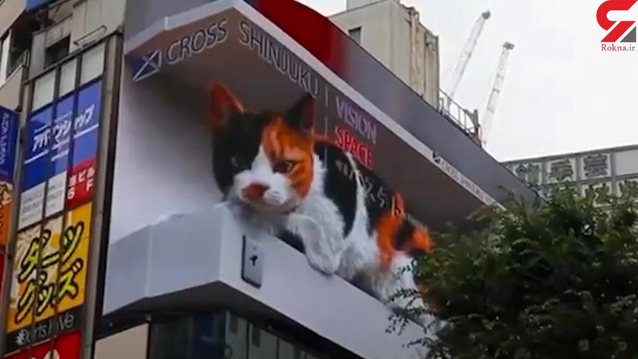 مشاهده گربه سهبعدی بالای ساختمان + فیلم
