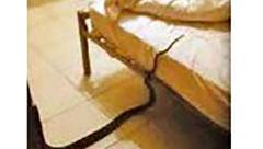 مار پیتون زیر لحاف زن جوان استرالیایی خزیده بود / وحشت در نیمه شب + عکس