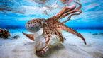 تصاویری شگفتآور از دنیای زیر آب +تصاویر دیدنی