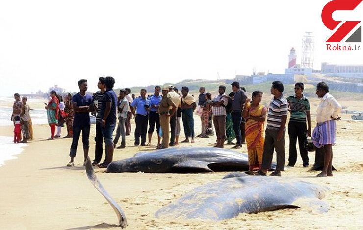 خودکشی دستهجمعی 80 نهنگ در سواحل هند