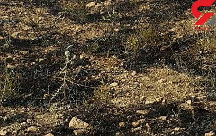 2 هکتار از باغ های همدان در آتش سوخت