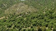 حکم پرونده تخلفاتی منابع طبیعی اردبیل هنوز صادر نشده است