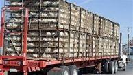 توقیف محموله ۱۸۰۰ قطعهای مرغ زنده در نهبندان