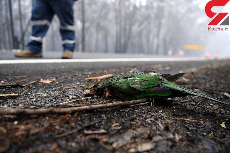 جدیدترین عکس ها از آتش سوزی در جنگل های استرالیا