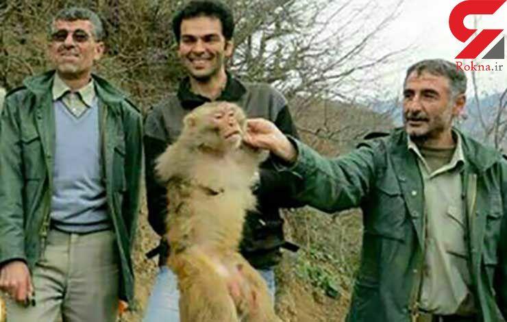 تعقیب و گریز محیطبانان با یک میمون در جنگل