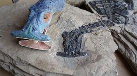 فسیل 242 میلیون ساله حیوان سرچکشی +فیلم و عکس