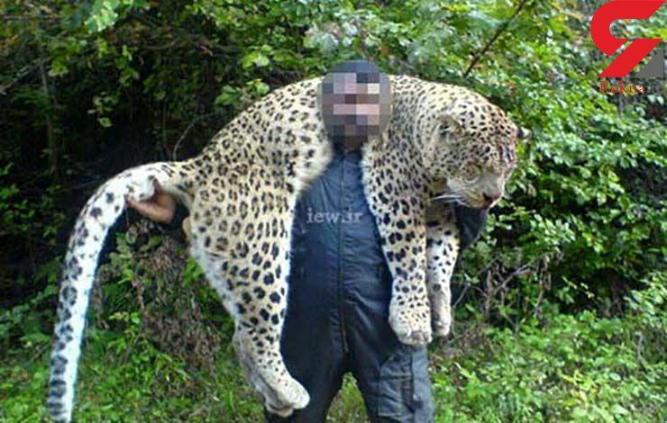شکارچی پلنگ مازندران به 2 سال حبس محکوم شد+عکس