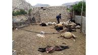حمله شبانه 5 گرگ وحشی به 2 روستای داراب + عکس