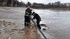 نجات یک ساروی از رودخانه / او در یک قدمی غرق شدن بود