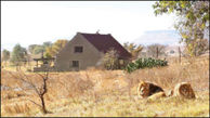 مردی که خانه اش در محاصر 77 شیر درنده است+ عکس