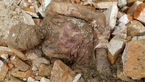 اولین عکس و سلفی از جسد مومیایی رضا شاه + عکس