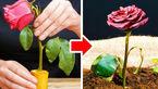 چطور به تکثیر انواع گل و گیاه بپردازیم؟ + فیلم