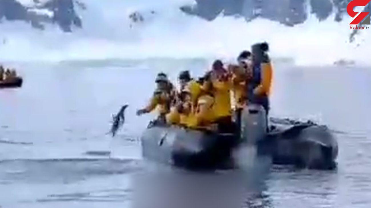 نجات پنگوئن از مرگ حتمی + فیلم