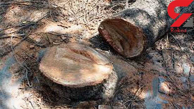 قطع درختان در صدر شکایتهای مردمی شهریار