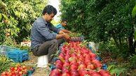 کاهش قیمت شلیل، شبرنگ، هلو و هندوانه در میادین میوه و تره بار