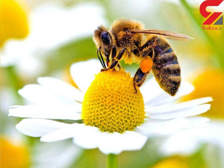 درمان بیماری های پوستی با سم زنبور