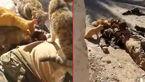 گربه هاجسدیک داعشی را خوردند!+تصاویر