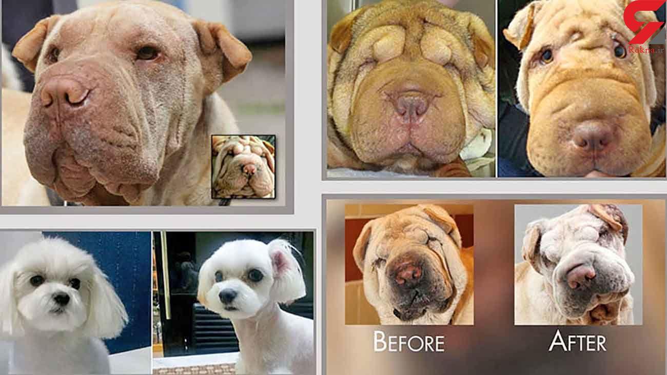 جراحی زیبایی در حیوانات + جزئیات