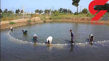 افزایش حدود 20 درصدی تولید آبزیان در کشور