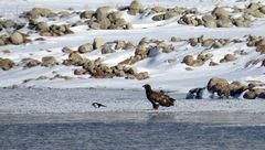 مشاهده یک گونه پرنده در خراسان شمالی برای اولین بار+ عکس