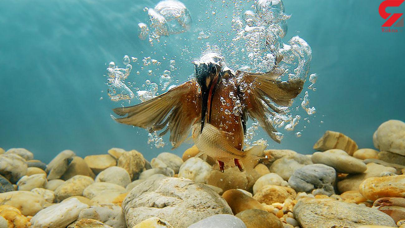 عکس متفاوت از مرگ ماهی در زیر آب