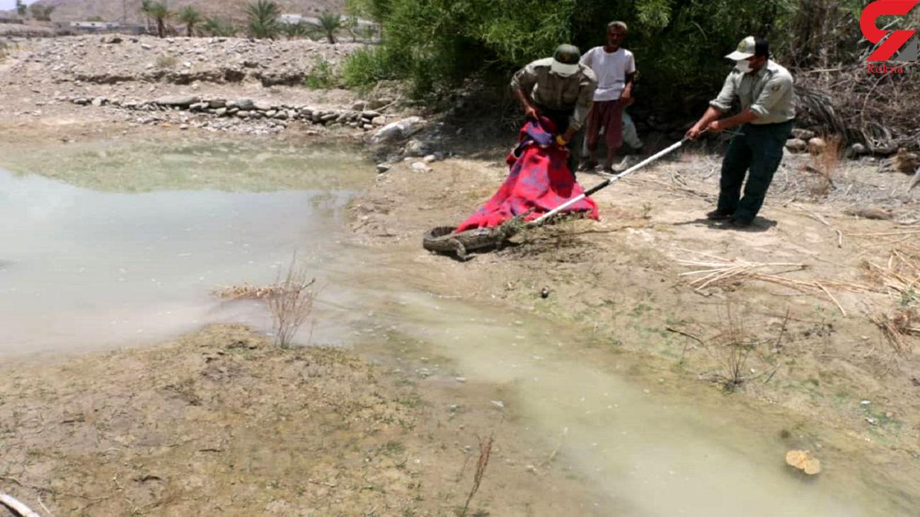 وحشت از گاندو در سیستان و بلوچستان / کشاورزان به موقع وارد عمل شدند