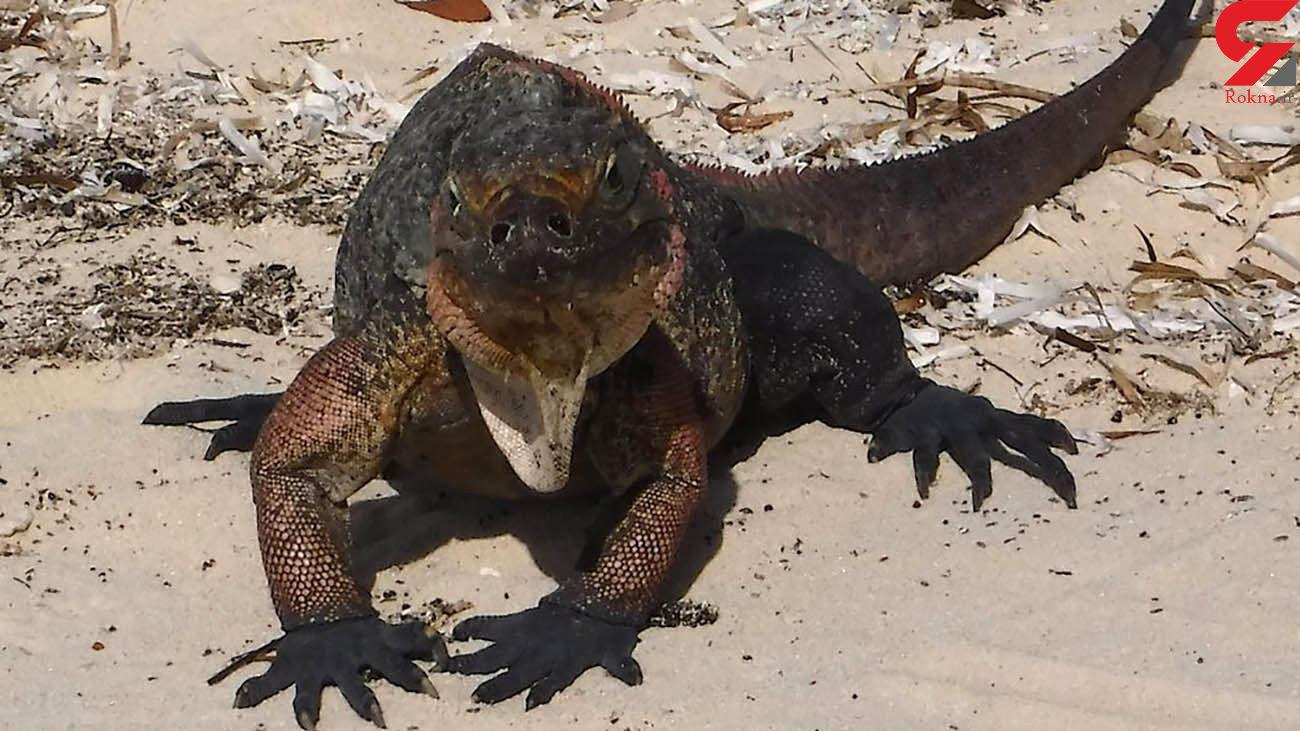 حیوان ترسناک بزرگ در حیاط خانه یک زن + عکس