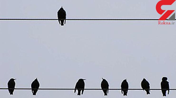 مرگ هولناک 11 پرنده شکاری در بندرعباس /  لاشه درکنار تیر برق افتاده بود !