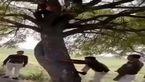 اقدام جنجالی پلیس برای دستگیری دزد فراری + فیلم
