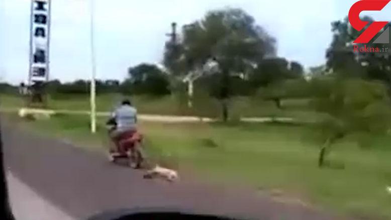 روش جنونآمیز صاحب یک سگ برای آموزش یافتن مسیر خانه! + فیلم