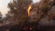 آتش سوزی در سالوک اسفراین