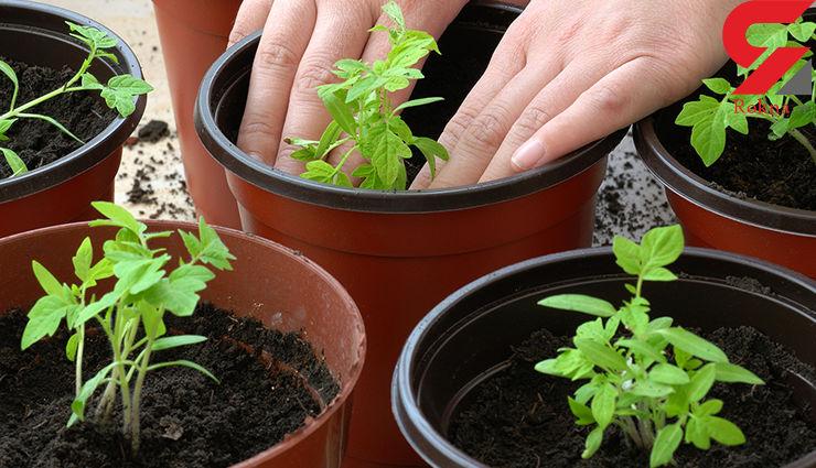 فوت و فن کاشت و برداشت سبزیجات خانگی