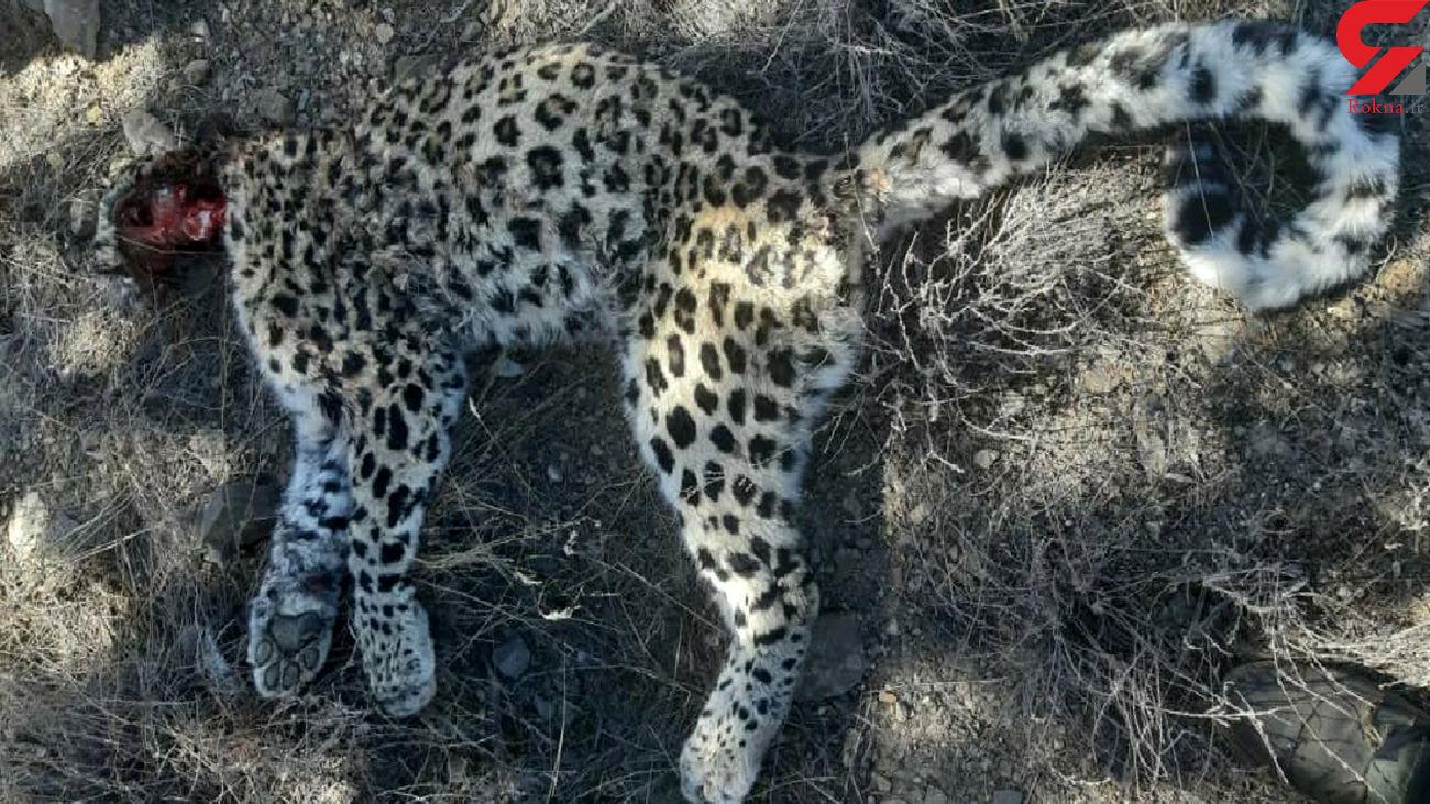 پشت پرده مرگ یک توله پلنگ در پارک ملی گلستان