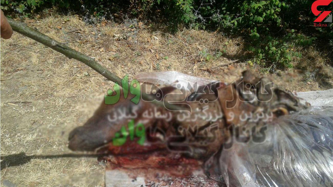 عکس 16+ / بریدن سر یک اسب برای فروش گوشت در شمال