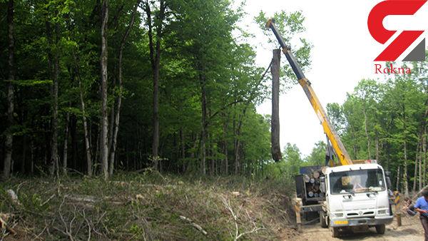بهرهبرداری از جنگلهای شمال ممنوع است