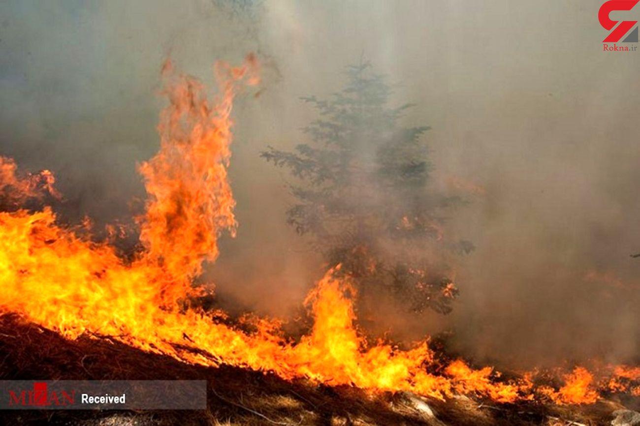 بررسی علت آتش سوزیهای اخیر جنگلهای مازندران