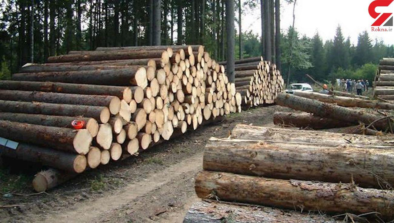 جنگل خواری ها ادامه دارد / طرح ملی که دولت با آن مخالفت کرد