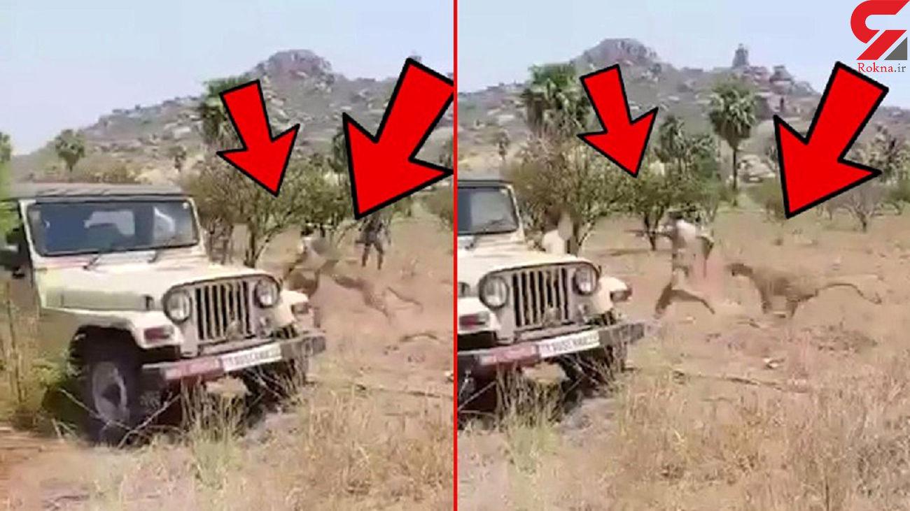 فیلم لحظه حمله وحشتناک پلنگ به مامورجنگلبانی / هند