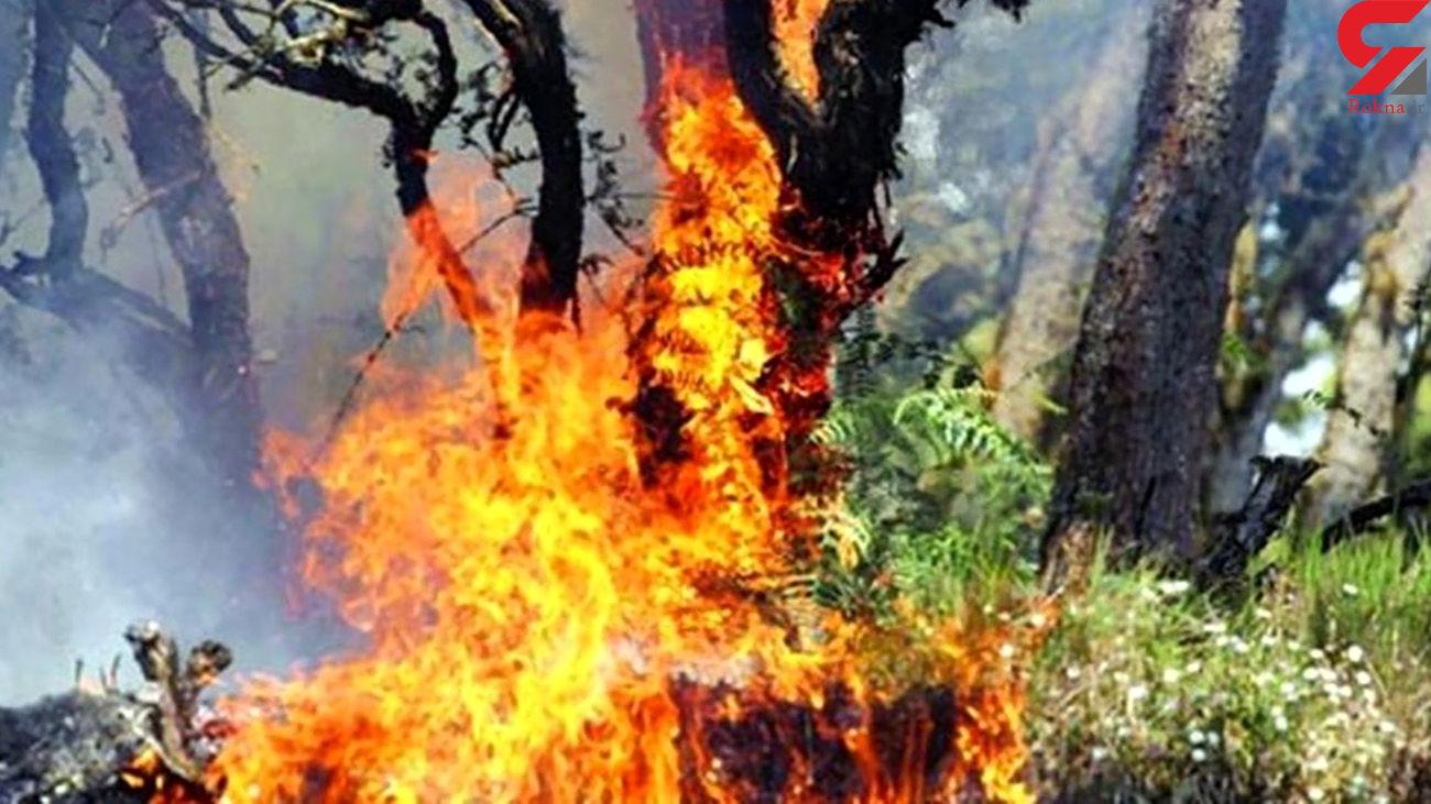 درخت گردوی 800 ساله به آتش کشیده شد / در لرستان رخ داد + فیلم  و عکس