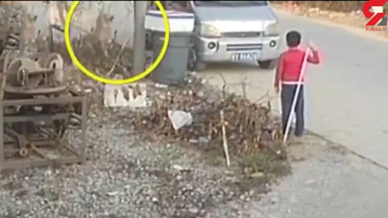 دزدیدن سگ خانگی در 5 ثانیه! + فیلم