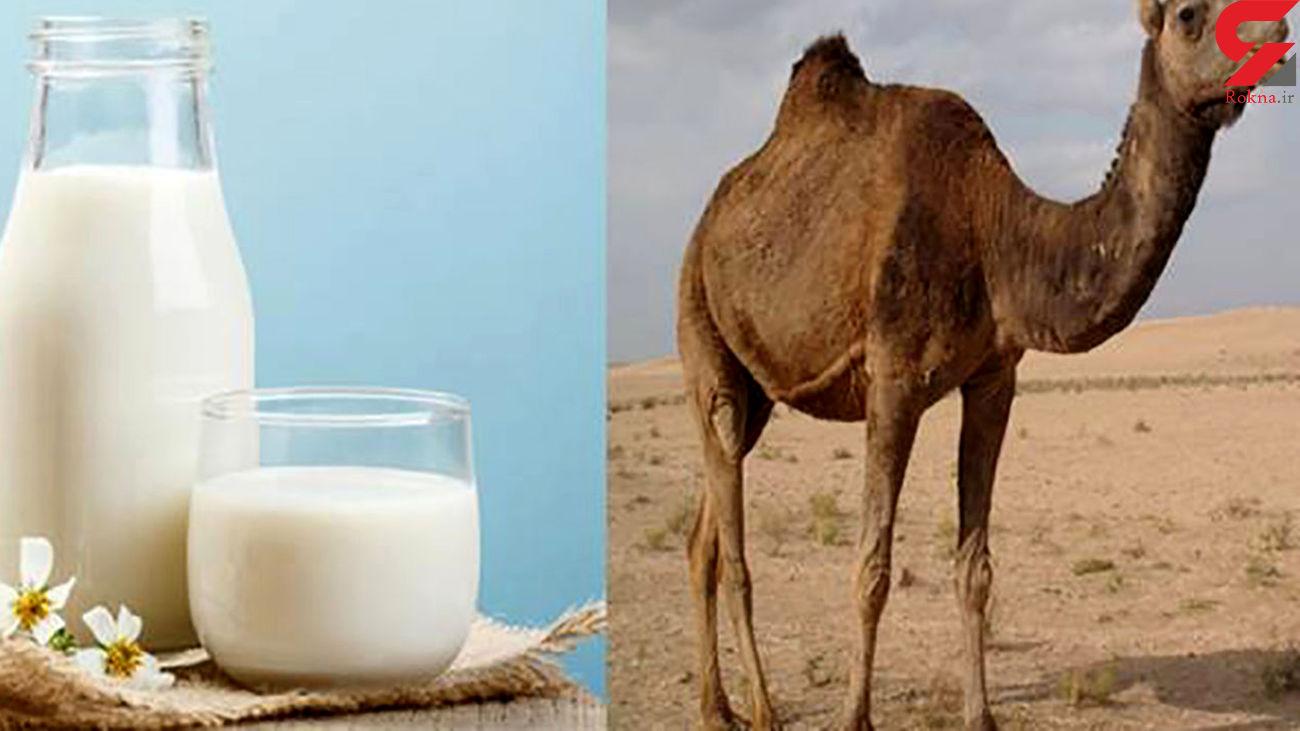 کنترل دیابت با شیر شتر