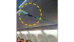 وحشت مسافران خارجی از موجود خطرناکی که از سقف هواپیما آویزان بود+عکس
