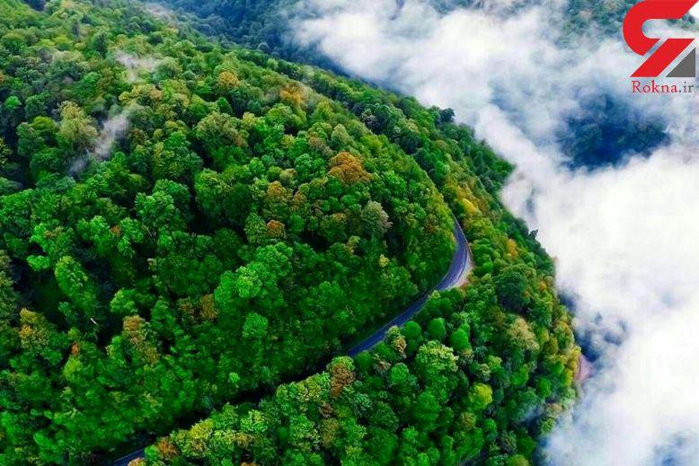 رویایی ترین جاده جنگلی ایران+تصاویر