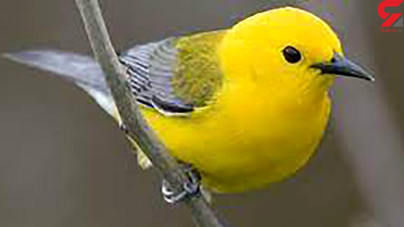 به پرنده ها این خوراکی ها را ندهید! / شهرنشین ها بخوانند!