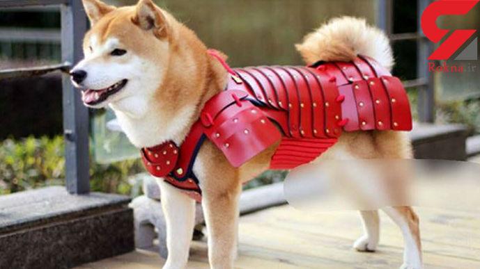 زره های سامورایی زیبا برای سگ ها و گربه های خانگی +تصاویر