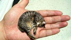 ثبت کوچکترین و خوش شانس ترین گربه دنیا در کتاب گینس+عکس