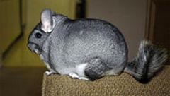 این حیوان گرانقیمت ترین پوست را دارد+عکس